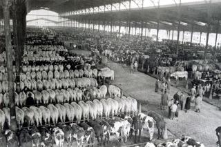 La Halle aux bœufs